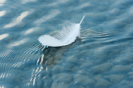 Feather on water