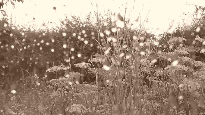 Rain in Sepia
