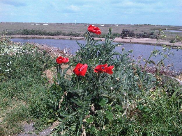 Brancaster Poppies