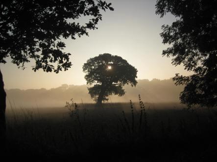 Foggy Tree Troiku