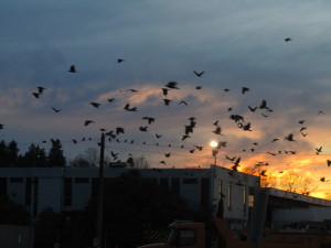 Winter Twilight with Crows