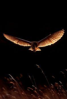 Ocarina Owls
