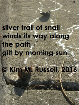 Silver Trail of Morning haiga