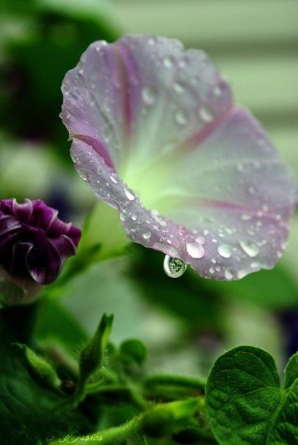 A Cup of Morning Dew