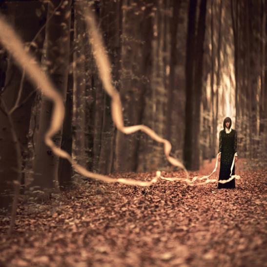 Echoes of an Autumn Walk