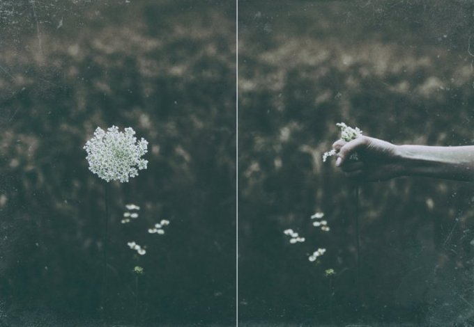 Fistul of Flowers