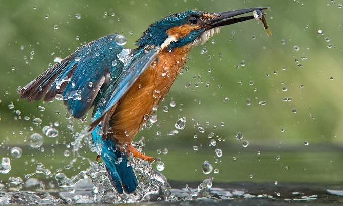 Stunning images of Kingfisher