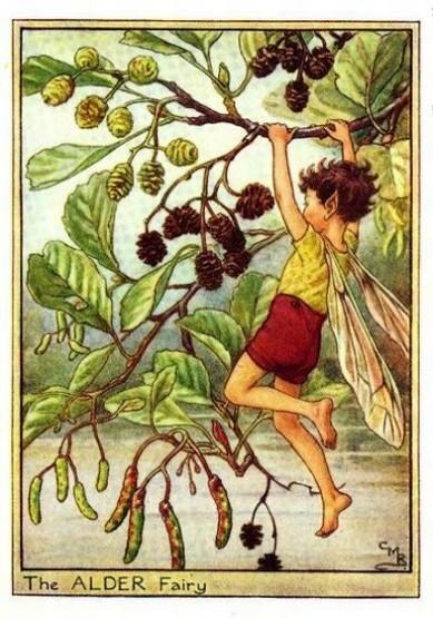 Alder-Flower-Fairy