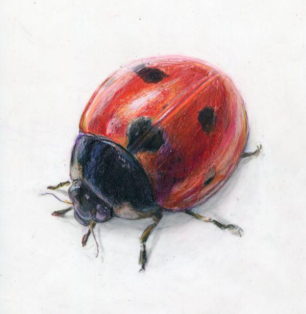 Bish Barney Bee