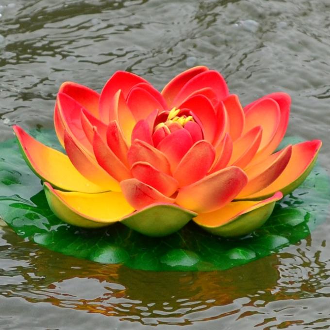 Lotus Flames