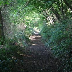Woodland_Path_-_geograph.org_.uk_-_982713