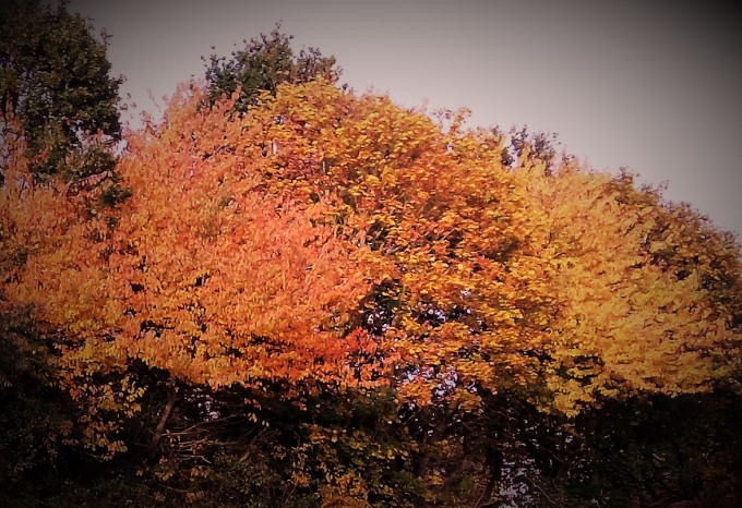 Autumn Quadrille 2