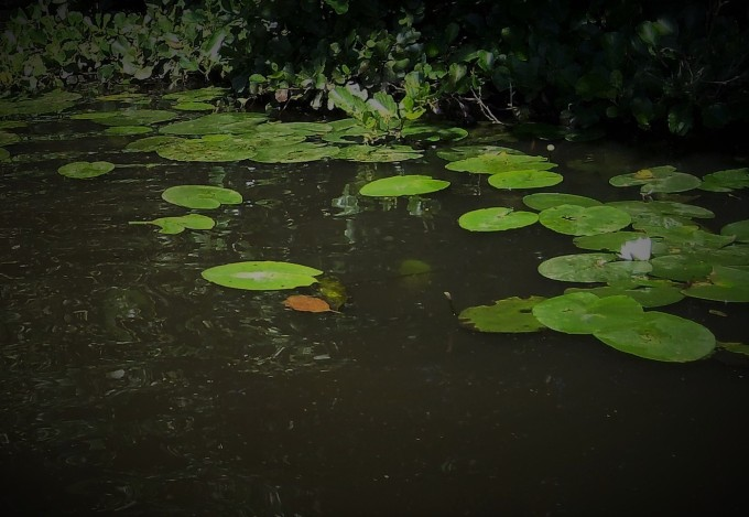 frog-chorus