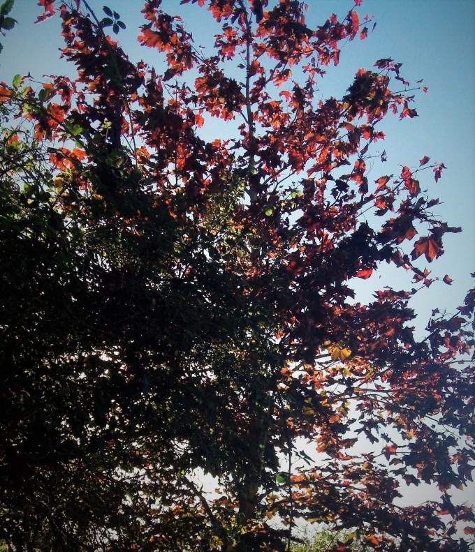 rusty-tree