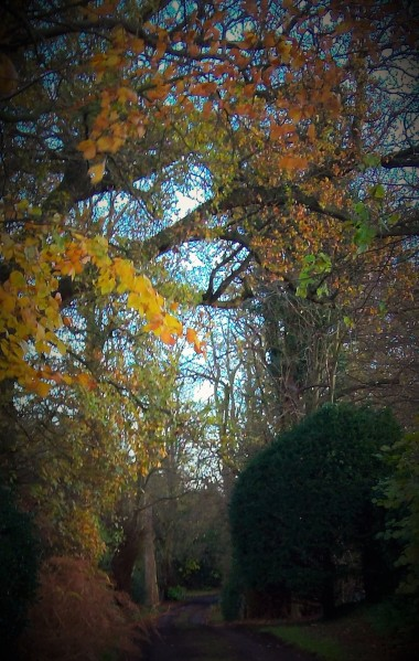 The Secnt of an Autumn Embrace
