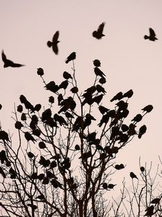 wings-and-leaves