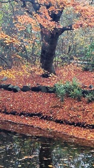 autumn-symphony