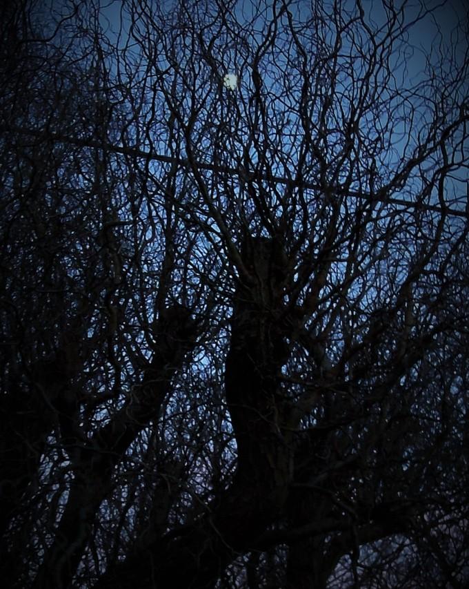 bare-branches-2
