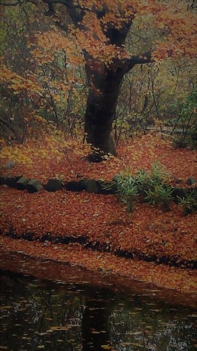 gardening-in-the-autumn-rain-2