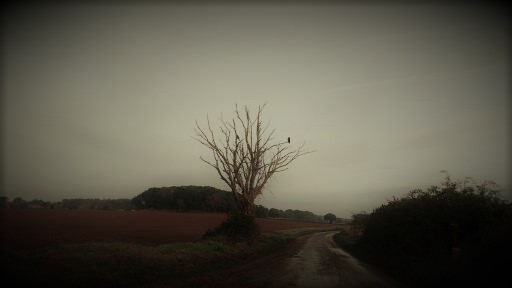 lonely-crow