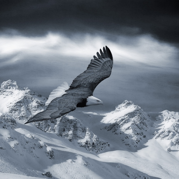 eagle-in-snow