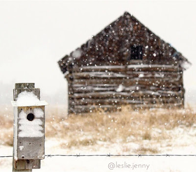 snow-birthed-tale-cabin-in-the-snow-by-jenny-leslie