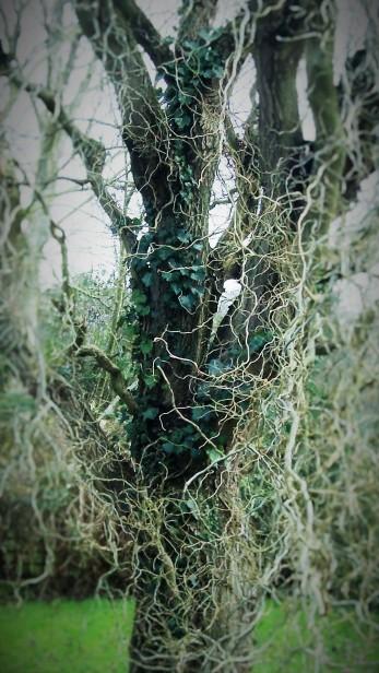 twisty-willows