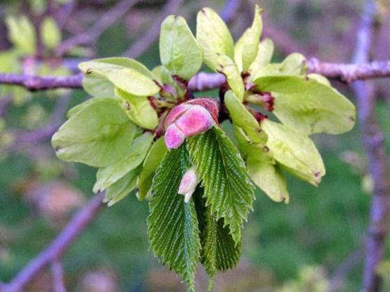 Spring Secret