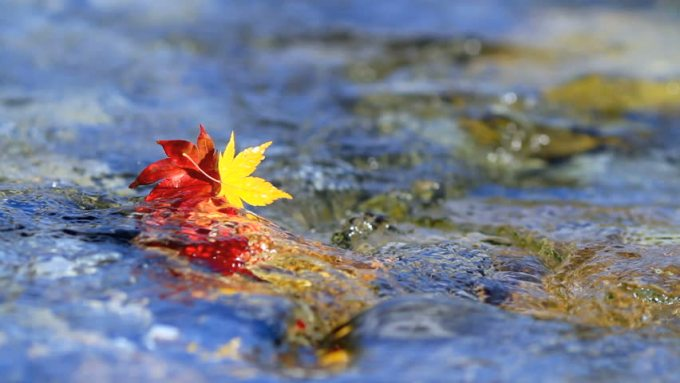 Leaves Float Away