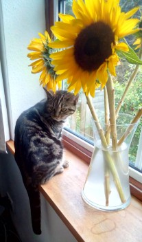Mojo and the Sunflowrs 4