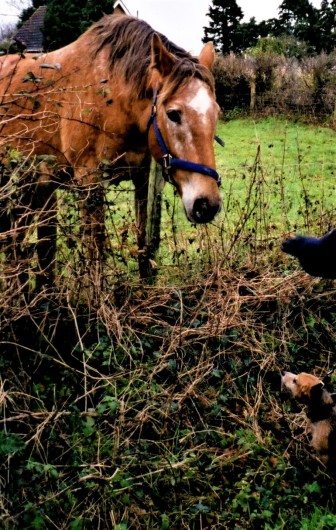 Jasper with a horse027