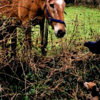 Jasper with a horse027