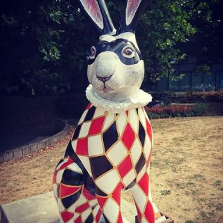 Image result for harlequin norwich hares 2018