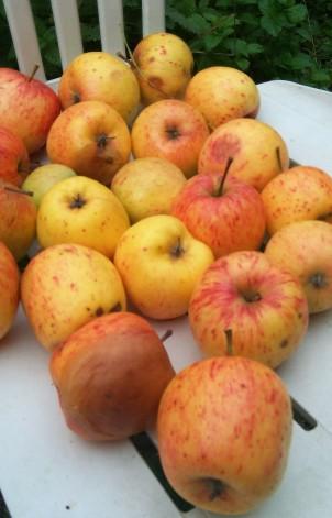 October Apples