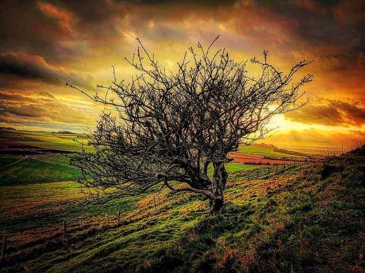 Image result for Beltane hawthorn at sunset