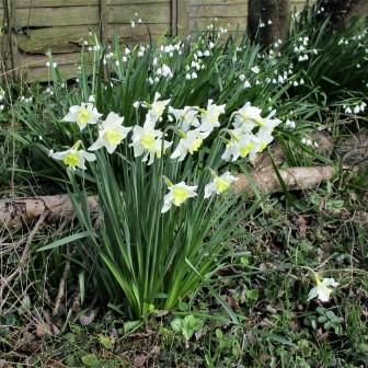 Conjuring Spring