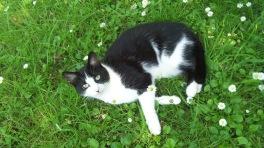 Feline muse 3